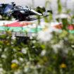 La penalità di Magnussen aiuta Hamilton: il #44 partirà 4° nel GP d'Austria
